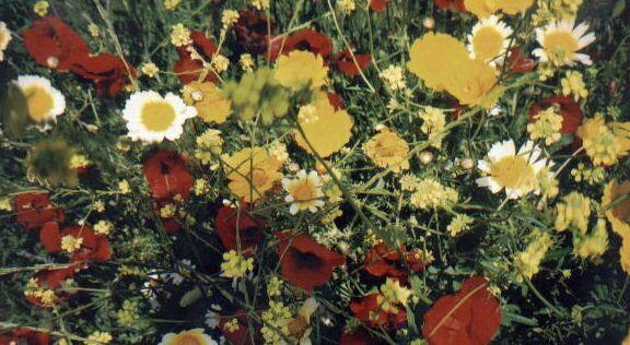 Bursting Wildflowers