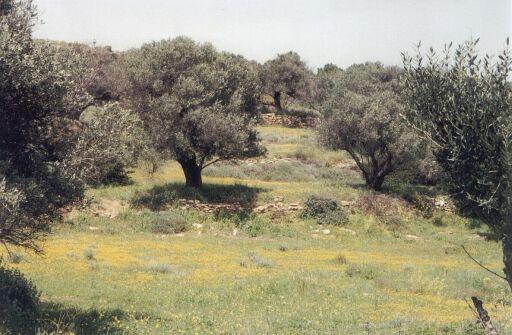 OliveGrove4
